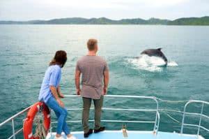 bay of islands neuseelandreise delfinbeobachteungurlaub neuseeland reiseanbieter auckland neuseelandrundreise gruppenreise sekbstfharer mietwagenreeise luxusreisen individualreise