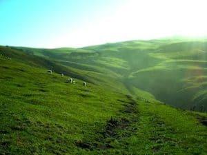 Urlaub Neuseeland Gruppenreise Mietwagenreise 3 Wochen Neuseeland Individualreise Luxureise Studienreise Wandern Kleingruppe deutschsprachig Neuseelandexperten