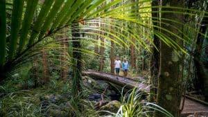 Northland Whangarei neuseeland rundreisen luxusreisen geführtetouren individualreisen familienurlaub selbstfahrer neuseelanduralubsreise1