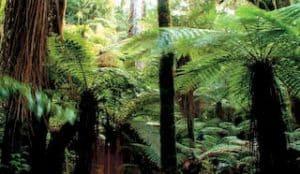 Neuseeland Angebote Gruppenreise 3 Wochen Natur-Rundreise deutsch geführt Neuseeland urlaub Mietwagenreise Individualreise Neuseelandspezialist Auckland Reiseveranstalter