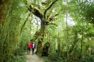 Neuseeland Natur urlaub erlebnisreise gruppenreise rundreise mietwagen selbstfahrer deutsche reiseleiter hochzeitsreise individualreise Reiseveranstalter Neuseeland deutsch Auckland