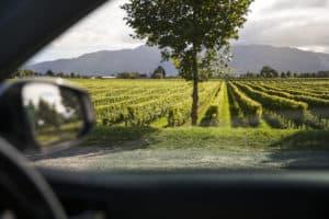 Blenheim Marlborough neuseeland mietwagenrundreisen selbsfahrer wein neuseelandtnz
