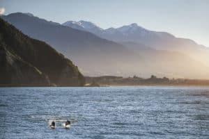 Kaikoura delfine neuseelandurlaub neuseelandrundreisen wale mietwagenreise natur aktivreise dolphins tnz