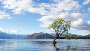 wanaka selbstfahrer touren hochzeitsreise neuseeland gruppenreise geführte deutschspraachige privatrundreise neuseelandurlaub buchen