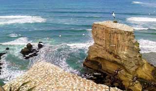 Auckland Neuseeland urlaub tagesausflug westküste muriwai tagestour deutsch reiseleiter gruppe tagestouren individuell