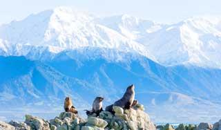 neuseeland rundreisen kaikoura individuell gruppenreisen geführte rundreise neuseelandurlaub deutschS