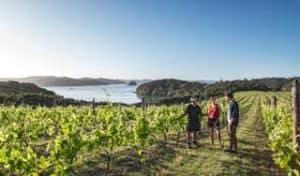 neuseeland weinreisen food wine wein gourmetreisen rundreisen neuseelandurlaub indivualreise mietwagenrundreise selfbstfahrer