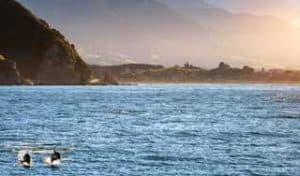 neuseeland rundreise delfine erlebnisreisen deutscher reiseveranstalter mietwagenrundreise kaikoura gruppenreisen