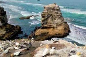 Auckland urlaub neuseeland tagestour westküste muriwai ausflug neuseelandreise deutsch
