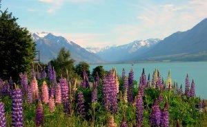 Neuseeland rundreise lake ohau Mietwagenreise Luxusreise Gruppenreise Honeymoon Naturreisen buchen deutsche Reiseexperten Neuseeland Auckland