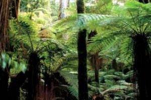 neuseeland Rotorua Whirinaki Rainforest natur wandern farn rundreisen Studienreise gruppenreise deutsch geführte rundreise urlaub