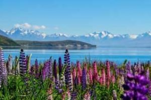 neuseeland lake tekapo rundreisen gruppenreisen natur individuell mietwagenreisen erlebnisreisen